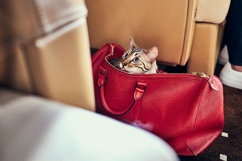 VistaJet, cat on board private jet