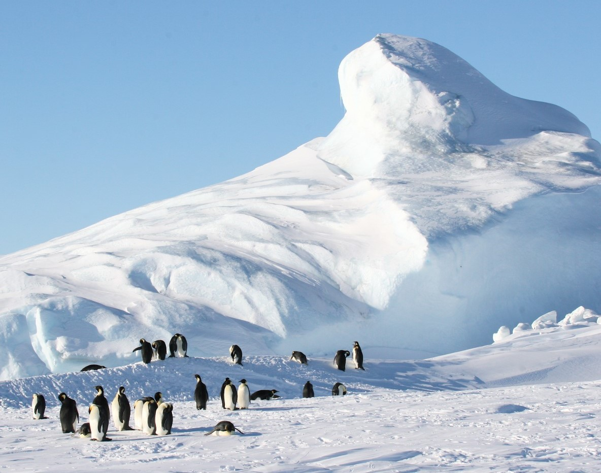 Observe and Contribute to Antarctica Biodiversity
