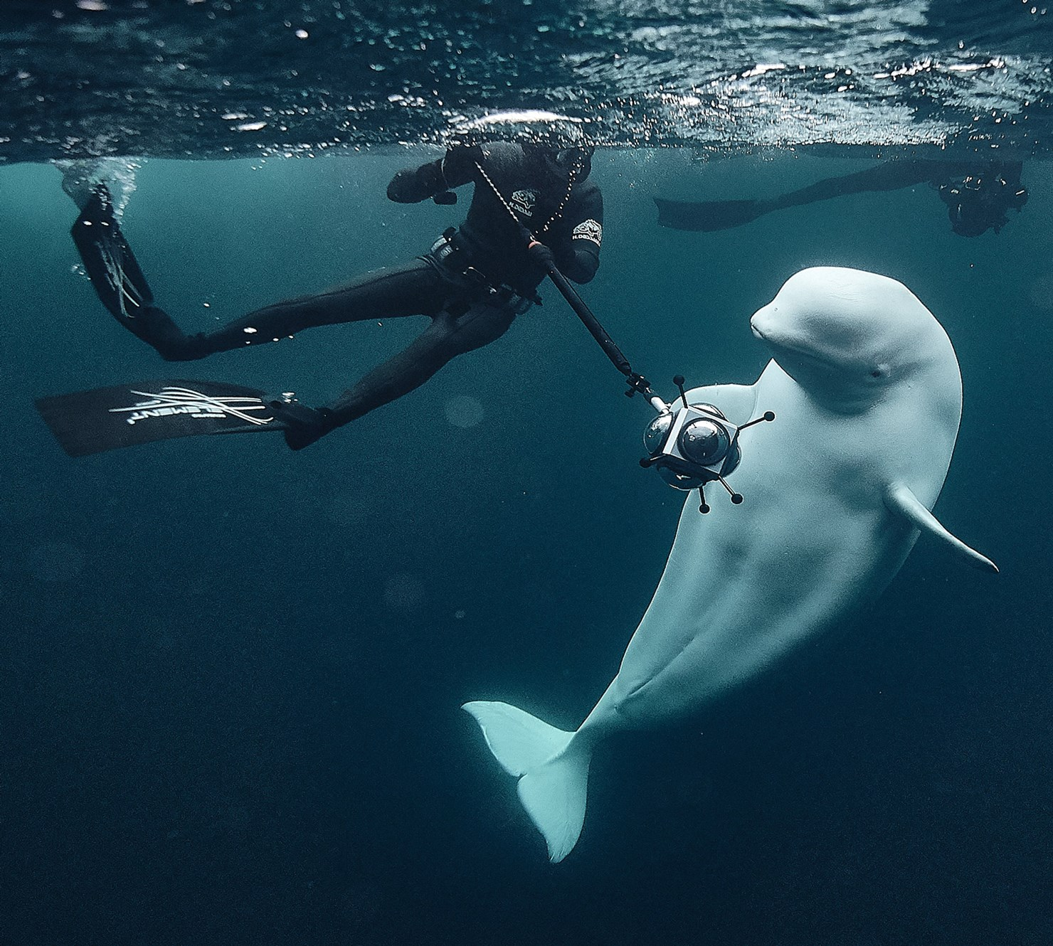 Freediving in the Indian Ocean, the Azores and Norway