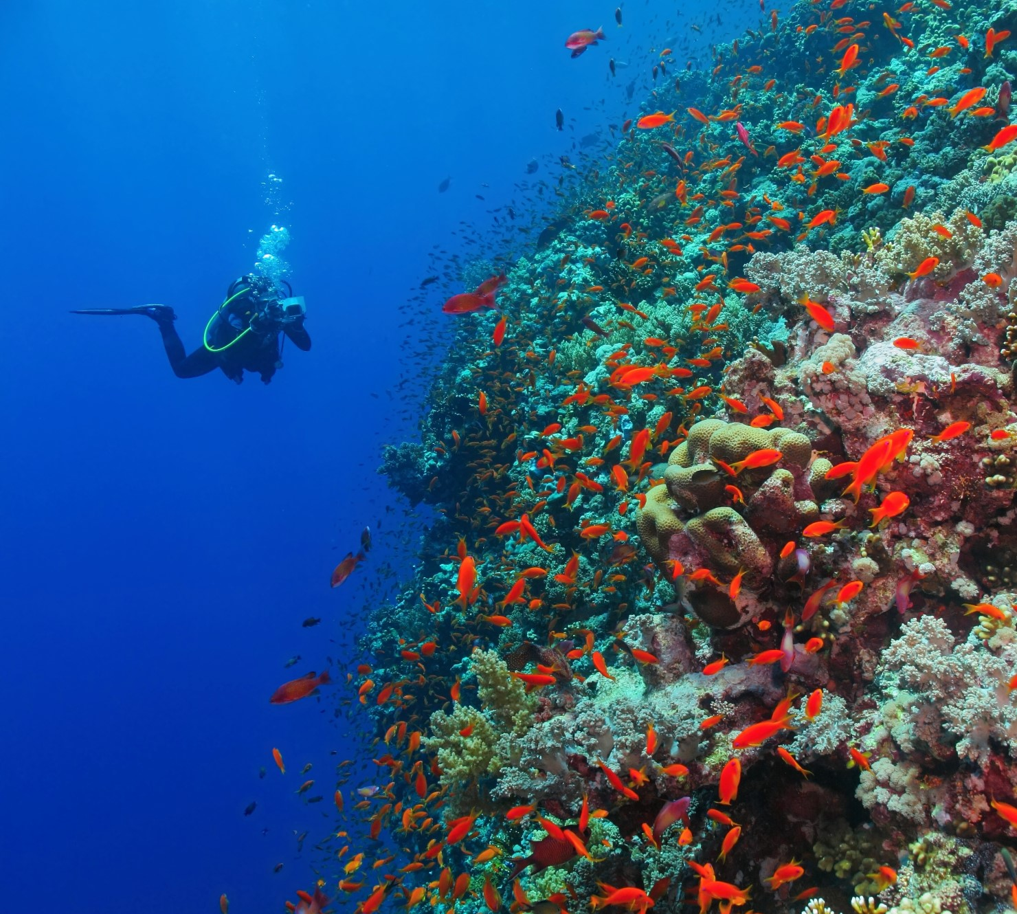 Preserving the Pristine Atolls of the Red Sea